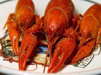 crawfish-800x600.jpg